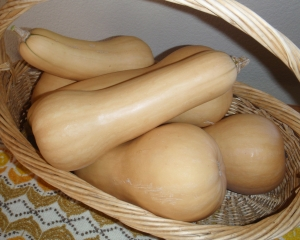 Butternut Squash, Connie Cockrell